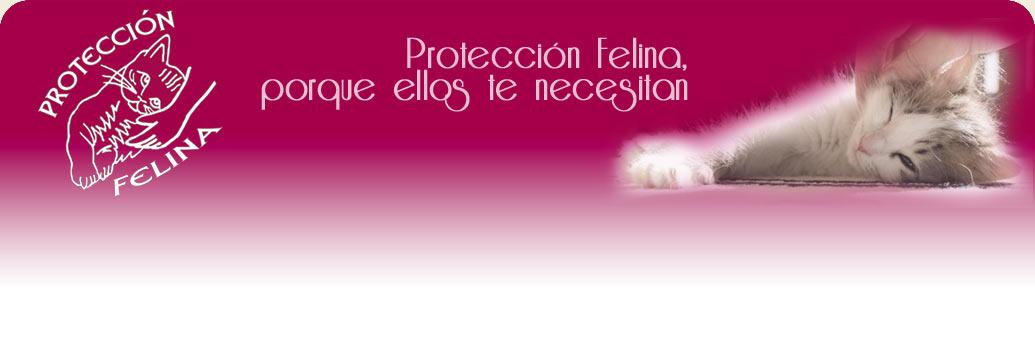 Protección Felina, porque ellos te necesitan