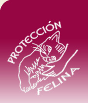 Protecci�n Felina
