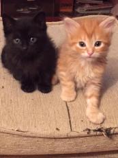 Orange y Black