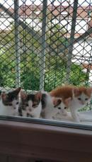 Bea, Susi, Iris y Sol