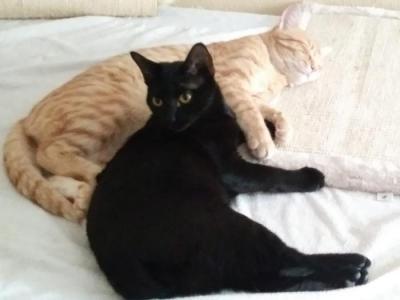 Leo y Bagheera
