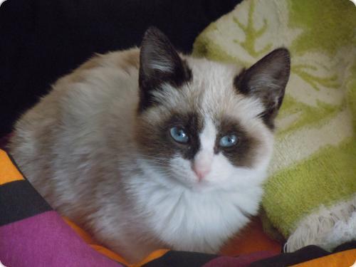 Rayuela ( Una de las gatittos que necesitaban urgente un hogar)